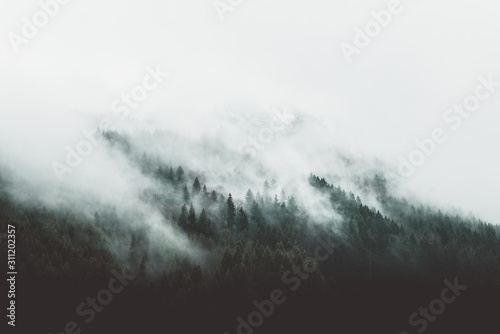 Obraz Moody forest landscape with fog and mist - fototapety do salonu