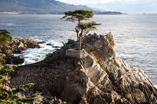 Lone Cypress At Pescadero Point Monterey Peninsula California