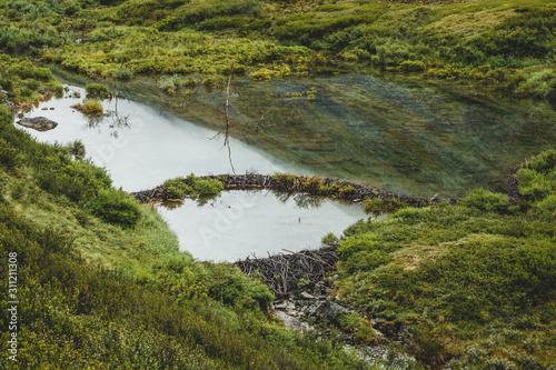 Obraz na plátně  Beaver dam in a creek in old glacier near Denali, Alaska