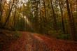 Wald Weg Bäume Sonnenstrahlen