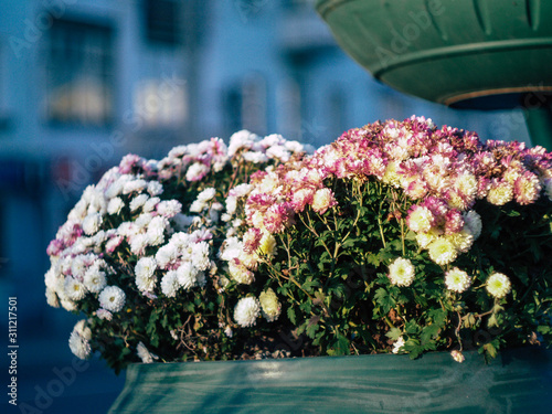 Fototapety, obrazy: morning flowers in the cold city