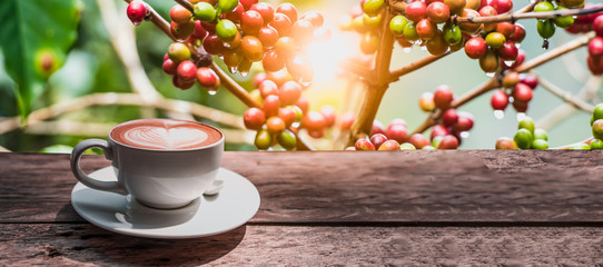 Coffee cup on wooden board with coffee tree on background for banner.