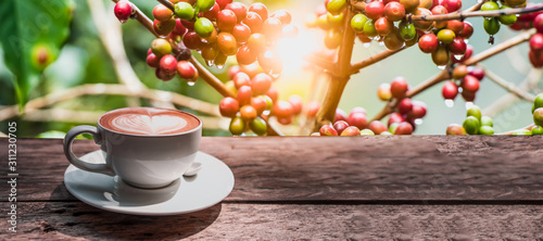 Coffee cup on wooden board with coffee tree on background for banner. - 311230705