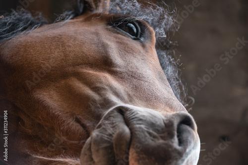 Fotografía  cara caballo 1