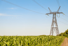 Power Transmission Tower. Air Wires Hi-voltage Electric Line Supports At Corn Field Under Blue Sky.