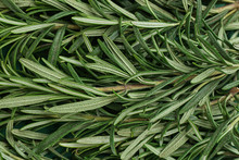 Fresh Organic Rosemary As Background, Top View