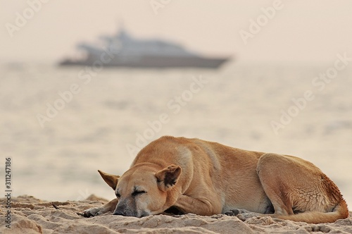 Photo Landscape with dog amid and blurred cruise liner