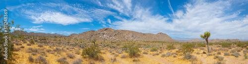 Joshua Trees panorama in Joshua Tree National Park near Yucca Valley, California CA, USA Wallpaper Mural