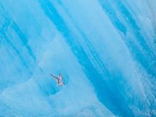 Arctic Tern (Sterna Paradisaea) Flying In Front Of Icelandic Glacier. Jokulsarlon - Glacier Lagoon