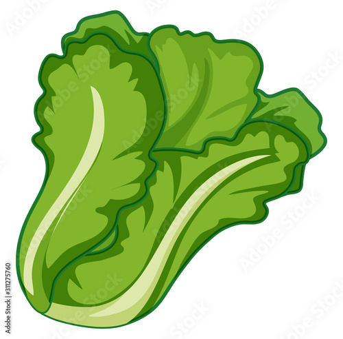 Green lettuce on white background