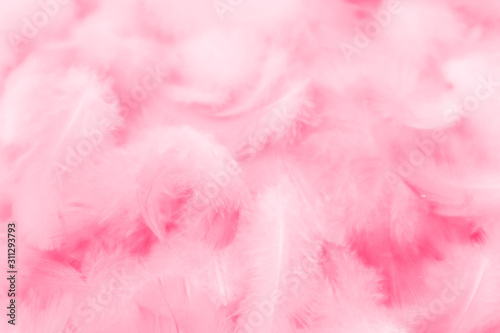 Beautiful abstract colorful white and pink feathers on white background and soft white red feather texture on pink pattern, pink background