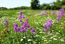 Sommerwiese Am Waldrand öko