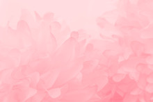 Beautiful Abstract Color White And Pink Flowers On White Background And White Flower Frame And Orange Leaves Background Texture, Flowers Banner