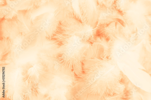 Fotomural  Beautiful abstract colorful yellow brown and white feathers on white background