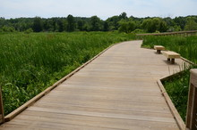 Wooden Boardwalk With Benches And Green Plants In Wetland Area