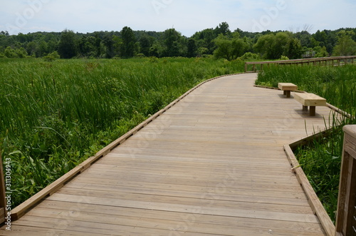 Fotomural wooden boardwalk with benches and green plants in wetland area