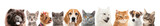 Fototapeta Zwierzęta - Set of different dogs and cats on white background