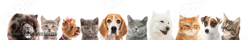 Photographie Set of different dogs and cats on white background