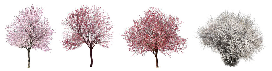 Collage with beautiful blossoming trees on white background