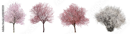 Collage with beautiful blossoming trees on white background Fotobehang