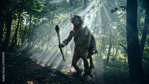 Primeval Caveman Wearing Animal Skin Holds Stone Tipped Spear Looks Around, Explores Prehistoric Forest in a Hunt for Animal Prey. Neanderthal Going Hunting in the Jungle - 311314501