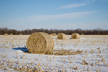 Sunny Winter Landscape View Of Round Corn Stalk Bales Setting In A Snow Covered Field, With Blue Sky Background