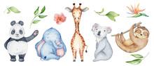 Watercolor Animals Character Collection. Panda, Sloth, Giraffe, Koala, Elephant