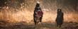 canvas print picture - Berner Sennenhund