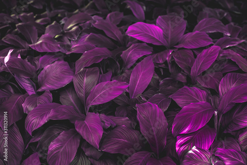 background with purple flowers #311320914