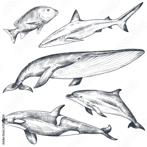 Fototapeta Vector collection of hand drawn ocean and sea animals in sketch style isolated on white. obraz