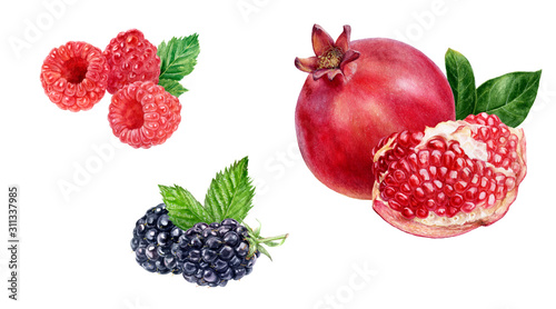 Pomegranate raspberry blackberry composition watercolor isolated on white backgr Canvas Print