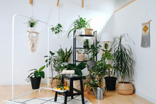Bright Home Greenhouse Full Of Plants In Ceramic And Wicker Pots
