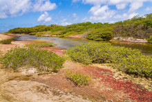 Landscape With Mangrove Forest On Island Bonaire