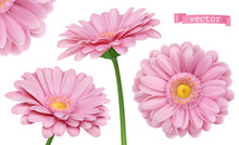 Pink Dahlia. Chamomile Flowers 3d Vector Realistic Set