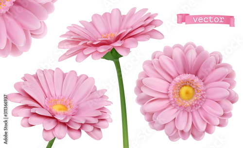 Fotografia Pink Dahlia. Chamomile flowers 3d vector realistic set