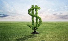 Green Plant In Shape Of Dollar Sign Grows At Field