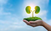 The Tree (kidney) Is A 3D Illu...