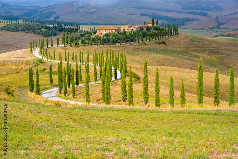 typisch Toskana, Pinienallee vor einem Bauernhof, Crete Senesi, Toskana, Italien