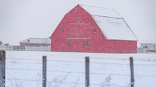 Big Red Barn In Winter During ...