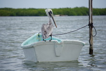 Pelican Resting On A Boat, Nature Reserve
