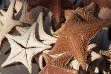 Several Starfish Dead And Dry ...