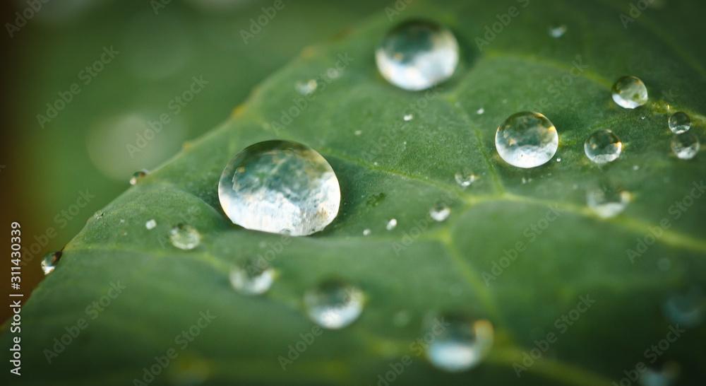 Fototapeta some raindrops are fallen on a leaf, in the sunlight, macro