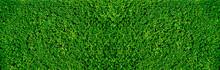 Closeup Nature View Of Green L...