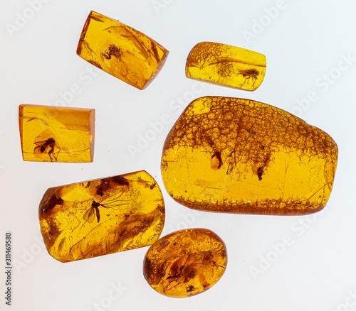 Inkluzje owadów w pomarańczowym bałtyckim bursztynie . Baltic amber with inclusions of mosquito, fly, ant isolated on white background - 311469580
