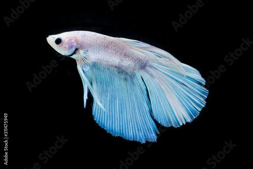 fish in aquarium Wallpaper Mural