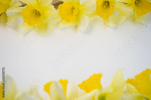 Beautiful yellow daffodils on white background, bright studio shot, copy space, Fototapet