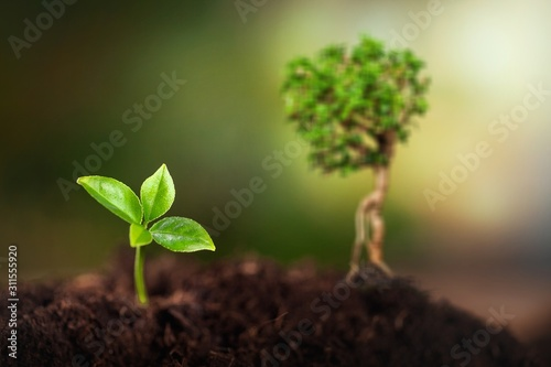 Green young plant in soil, new life concept