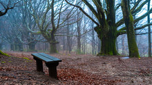 Bench In Misty Wood In Mont Ga...