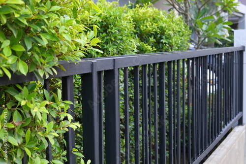 Tablou Canvas black steel iron fence of boundary house with green leaf of shrub tree growing w