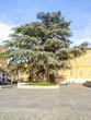 Baum am Hauptplatz, Italien, Emilia-Romagna, Reggio nell Emilia
